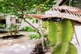 Foto de rancho en venta en avenida la selva , ejido, tulum, quintana roo, 14037669 No. 11