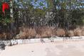 Foto de terreno habitacional en venta en calle 81 , aeropuerto, chihuahua, chihuahua, 19966908 No. 02