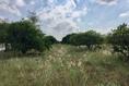 Foto de terreno habitacional en venta en camino de san isidro sn , el barranquito, cadereyta jiménez, nuevo león, 12822387 No. 08