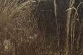 Foto de terreno habitacional en venta en cedros , santo tomas ajusco, tlalpan, distrito federal, 4644814 No. 02