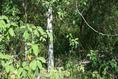 Foto de terreno habitacional en venta en ismael flores cantú , san roque, juárez, nuevo león, 10676738 No. 04