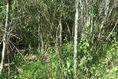 Foto de terreno habitacional en venta en ismael flores cantú , san roque, juárez, nuevo león, 10676738 No. 05