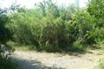 Foto de terreno habitacional en venta en ismael flores cantú , san roque, juárez, nuevo león, 10676738 No. 07