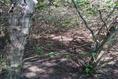 Foto de terreno habitacional en venta en ismael flores cantú , san roque, juárez, nuevo león, 10676738 No. 09