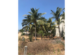 Foto de terreno habitacional en venta en  , los tamarindos, santa maría colotepec, oaxaca, 19354883 No. 07