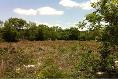 Foto de terreno habitacional en renta en  , progreso de castro centro, progreso, yucatán, 3034633 No. 01