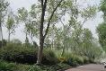 Foto de departamento en renta en prolongacion p de la reforma , bosques de las lomas, cuajimalpa de morelos, distrito federal, 0 No. 02
