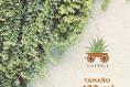 Foto de terreno habitacional en venta en  , san ignacio, progreso, yucatán, 14026078 No. 04