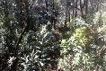 Foto de terreno habitacional en venta en  , valle de bravo, valle de bravo, méxico, 5694722 No. 03