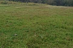 Foto de terreno habitacional en venta en San Miguel Ajusco, Tlalpan, Distrito Federal, 5196603,  no 01