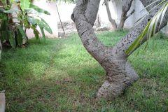 Foto de terreno comercial en venta en Manuel Crescencio Rejon, Mérida, Yucatán, 4306112,  no 01