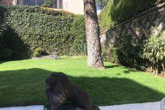 Foto de terreno habitacional en venta en Jardines del Pedregal, Álvaro Obregón, Distrito Federal, 4664167,  no 01