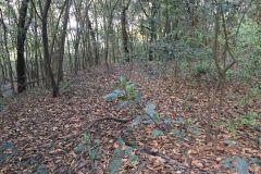 Foto de terreno habitacional en venta en Bosques de San Ángel Sector Palmillas, San Pedro Garza García, Nuevo León, 5216971,  no 01
