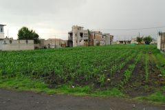 Foto de terreno habitacional en venta en San Andrés Cuexcontitlán, Toluca, México, 5332899,  no 01
