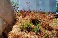 Foto de terreno habitacional en venta en Mozimba, Acapulco de Juárez, Guerrero, 3718633,  no 01