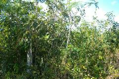 Foto de terreno comercial en venta en  , álamos i, benito juárez, quintana roo, 3796290 No. 01