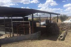 Foto de terreno habitacional en venta en  , altavista, cuauhtémoc, chihuahua, 4380297 No. 01