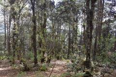 Foto de terreno habitacional en venta en calle innominada s/n , los alcanfores, san cristóbal de las casas, chiapas, 4037605 No. 01