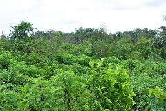 Foto de terreno comercial en venta en cancun 000, leona vicario, benito juárez, quintana roo, 3344818 No. 01