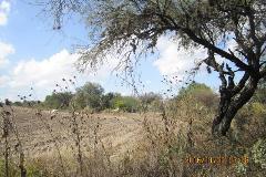 Foto de terreno comercial en renta en  , carrillo, querétaro, querétaro, 3385614 No. 01