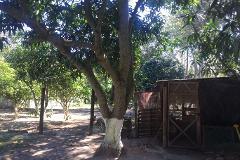 Foto de terreno habitacional en venta en  , ciudad cuauhtémoc, pueblo viejo, veracruz de ignacio de la llave, 3017672 No. 01