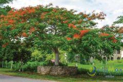 Foto de terreno habitacional en venta en Yucatan, Mérida, Yucatán, 4359137,  no 01