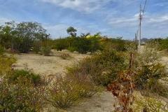 Foto de terreno habitacional en venta en  , el sargento, la paz, baja california sur, 4638002 No. 01