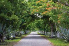 Foto de terreno habitacional en venta en Mérida, Mérida, Yucatán, 4404525,  no 01