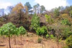 Foto de terreno comercial en venta en fraccionamiento de el manzanillo , san josé buenavista, san cristóbal de las casas, chiapas, 0 No. 01