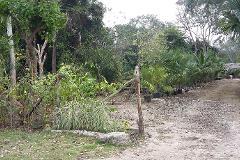 Foto de terreno comercial en venta en fraccionamiento el roble 0, supermanzana 212, benito juárez, quintana roo, 4573294 No. 01