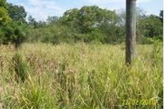 Foto de terreno habitacional en venta en guanajuato 0, mata redonda, pueblo viejo, veracruz de ignacio de la llave, 2648042 No. 01