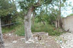 Foto de terreno habitacional en venta en  , jesús carranza, mérida, yucatán, 0 No. 01