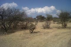 Foto de terreno habitacional en venta en carretera michimoloya , la malinche, tula de allende, hidalgo, 2990614 No. 01