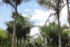 Foto de terreno comercial en venta en  , leona vicario, benito juárez, quintana roo, 3238125 No. 01
