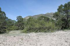 Foto de terreno habitacional en venta en manzana calle lote 1, arteaga centro, arteaga, coahuila de zaragoza, 384702 No. 01