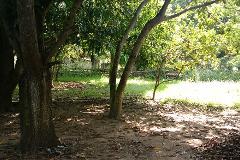 Foto de terreno habitacional en venta en magdaleno 0, francisco medrano, altamira, tamaulipas, 2816328 No. 01