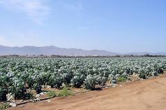 Foto de terreno comercial en venta en  , maneadero, ensenada, baja california, 2722336 No. 01