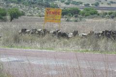 Foto de terreno habitacional en venta en  , michimaloya, tula de allende, hidalgo, 4561858 No. 01