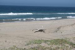 Foto de terreno habitacional en venta en  , reforma, la paz, baja california sur, 1220815 No. 04