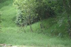 Foto de terreno habitacional en venta en  , reserva territorial, xalapa, veracruz de ignacio de la llave, 1116701 No. 01