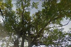 Foto de casa en venta en san bernardino 36, potrero de san bernardino, xochimilco, distrito federal, 0 No. 01