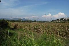 Foto de terreno habitacional en venta en  , san carlos, yautepec, morelos, 2261307 No. 01