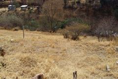 Foto de terreno habitacional en venta en  , san felipe del agua 1, oaxaca de juárez, oaxaca, 3405407 No. 01