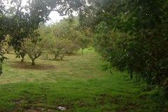 Foto de rancho en venta en  , san francisco tepetzingo, tenancingo, méxico, 2529526 No. 01