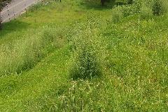 Foto de terreno habitacional en venta en  , san mateo nopala, naucalpan de juárez, méxico, 2199634 No. 01