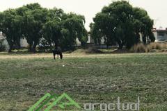 Foto de terreno habitacional en venta en  , san josé buenavista el chico, toluca, méxico, 3327871 No. 01