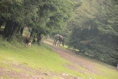 Foto de rancho en venta en  , santo tomas ajusco, tlalpan, distrito federal, 2732967 No. 02