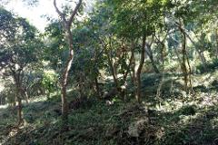 Foto de terreno habitacional en venta en  , terán, tuxtla gutiérrez, chiapas, 4525549 No. 01