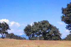 Foto de terreno habitacional en venta en  , villa del carbón, villa del carbón, méxico, 3269575 No. 01