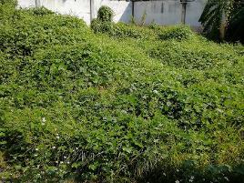 Foto de terreno industrial en venta en 5 norte 1476, santiago mixquitla, san pedro cholula, puebla, 12076838 No. 01